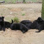 2011_0412sleepyheads0026