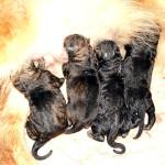 Baby-longcoats-10hrs-old