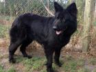 Koko-20th-march-2012-006_web