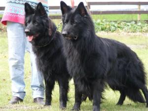 Sambo and Son 9