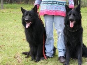 Sambo and Son_8