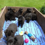 Tilly pups moving camp 026
