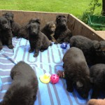 Tilly pups moving camp 028