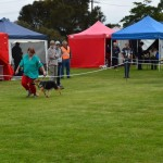 mt Gambier show 19th April 2014 032