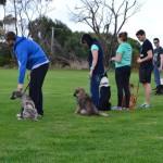 Shiloh dog training 11.5.14 005