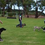 Shiloh dog training 11.5.14 007