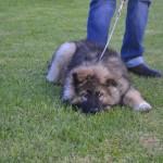 Shiloh dog training 11.5.14 025